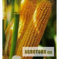 Семена кукурузы Фурио ФАО 350 Сингента