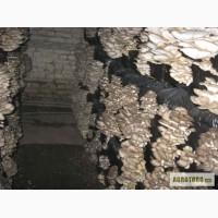 Выращивание грибов в домашних условиях, Консультации.
