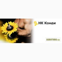 Продам насіння соняшника гiбрид НК Конді