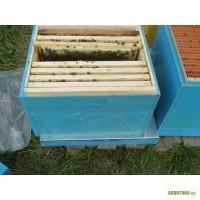 Продам пчелосемьи. Дон .обл. с. Верхнеторецкое
