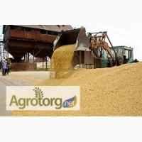 Пшеница 5 класса на условиях DAP Ереван, Армения