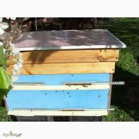 Пчелосемьи 8 шт.