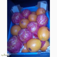 Продам Апельсин оптом Навел Египет