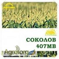 Продам семена кукурузы Соколов 407 МВ, ФАО-400