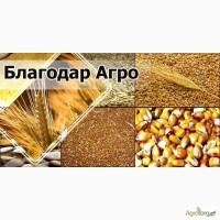 Купим пшеницу, кукурузу, гречку, сою, рапс, рожь, ячмень любого качества