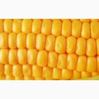 Кукуруза закупка