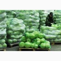 Продам капусту белокачанную и пекинскую от 5 тонн