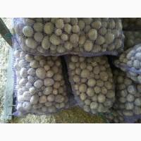 Продам насіневу картоплю Рів*єра
