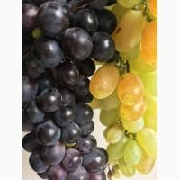 Продам десертный виноград
