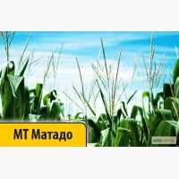Кукуруза МТ Матадо (Dow Seeds / Дау Сидс) Импорт