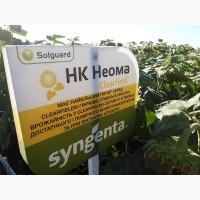 Семена подсолнечника НК Неома Круизер Clearfield (Syngenta)