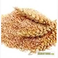 Отруби пшеничные с доставкой