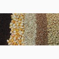 Куплю пшеницу ячмень рапс подсолнечник кукурузу