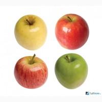 Куплю Яблоки урожай 2019 (на переработку)