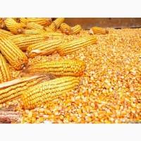 Куплю Кукурузу любого качества