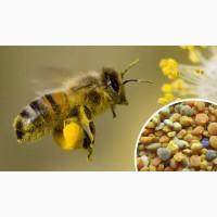 Купим пыльцу по всей Украине 90грн