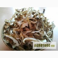 Сушеные грибы Киев оптом / Вешенка