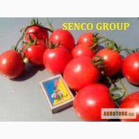 Полевой томат (помидор красный)