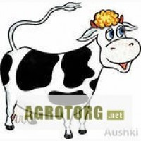 Куплю корову. Срочно!