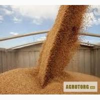Перевозка зерновых и зернобобовых культур в Украине