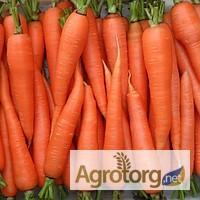 Семена Моркови весовые и пакетированные от самого производителя