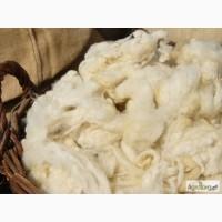 Куплю овечью шерсть