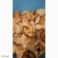Продам грибы маслята соленые, гриб белый соленый