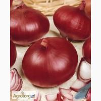 Продам семена Лук Рубин (Satimex Германия)