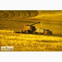 Закупаем пшеницу 2- 6 класса. Вся Україна