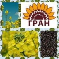 Авентадор озимий ріпак/якісне насіння