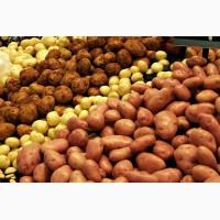 Закупка картошки