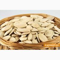 Закупаем семена тыквы в любых количествах