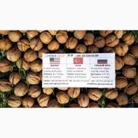 Грецкий орех 2018 на экспорт Walnuts 2018 for export
