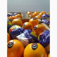 Апельсины_от производителя в турции