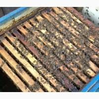 Продам пасіку, бджолосім#039;ї