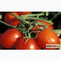 Продам помидоры оптом сливка