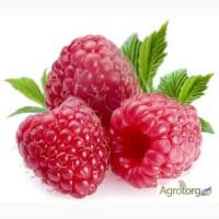 Куплю ягоду малину