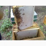 Продам качественый мёд из акации, липы