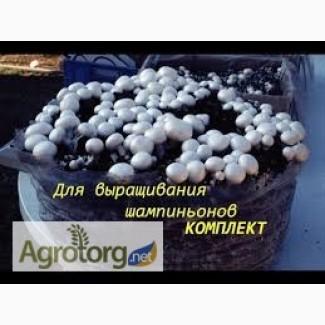 Шампиньоны, набор для выращивания грибов