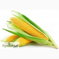 Куплю на переработку некондиционную кукурузу