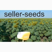 Купить семена подсолнуха Неома Сингента (под Евро-лайтинг)
