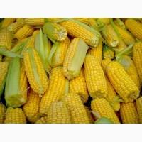 ОНІКС насіння кукурудзи