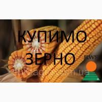 Постійно купуємо кукурудзу (побічний продукт кукурудзи)
