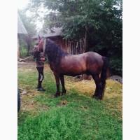 Продам робочого коня у добрі руки