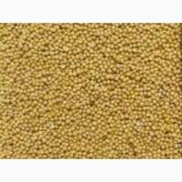 Семена горчицы жёлтой Роксолана