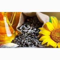 Продам посевные семена подсолнечника Полтава