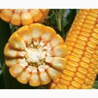 Акційна ціна на насіння кукурудзи ЛГ 30352