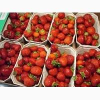 Продам клубнику с поля сладкую крупную красивый товарный вид