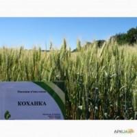 Пшеница сорт коханка, акция 8100