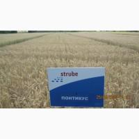 Високоякісна озима пшениця Понтікус (Штрубе, Німеччина) для харчової промисловості